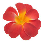 Zomerse bloem rood ca. 7 cm (10 stuks)