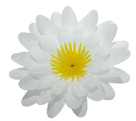 Gerbera wit stof klein ca. 6,5 cm (10 stuks)