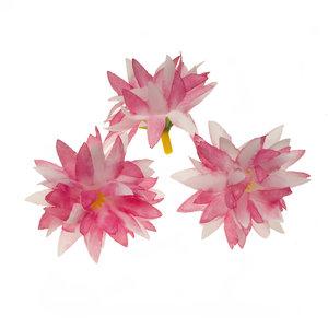 Chrysant wit/roze met puntige blaadjes ca. 5 cm (10 stuks)