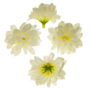 Chrysant vanille met ronde blaadjes ca. 5 cm (10 stuks)