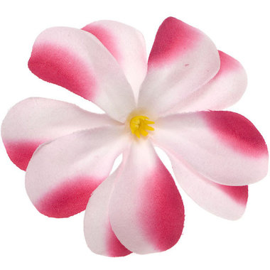 Zomerse bloem wit met fuchsia ca. 7 cm (10 stuks)