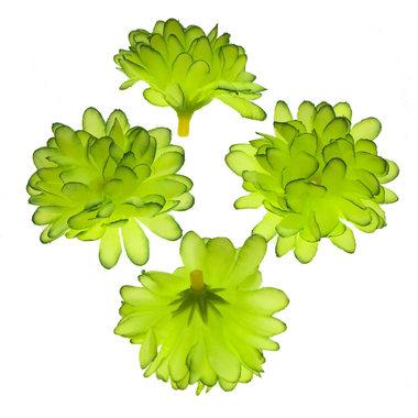 Chrysant groen met ronde blaadjes ca. 5 cm (10 stuks)
